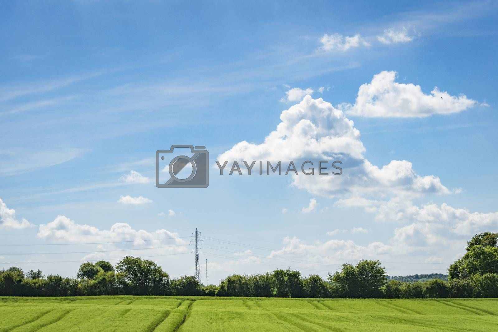 Green fields in a rural countryside landscape with trees and pylons and white clouds on blue sky