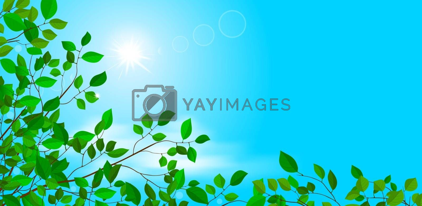 Branches of a tree with leaves. The sun in the blue sky. Cloud. Summer background.