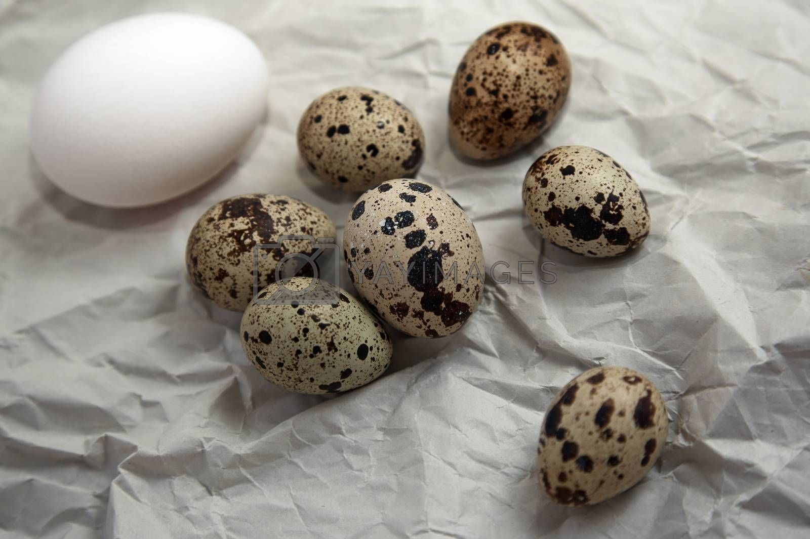 Chicken and quail eggs by Novic
