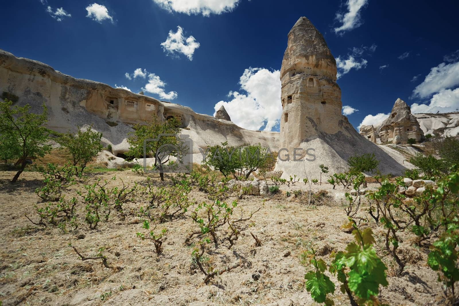 Wineyard at the geological rock formation in Cappadocia, Turkey