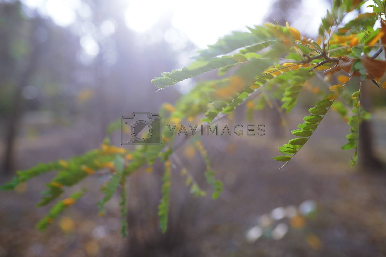 Green leaves in autumn forest