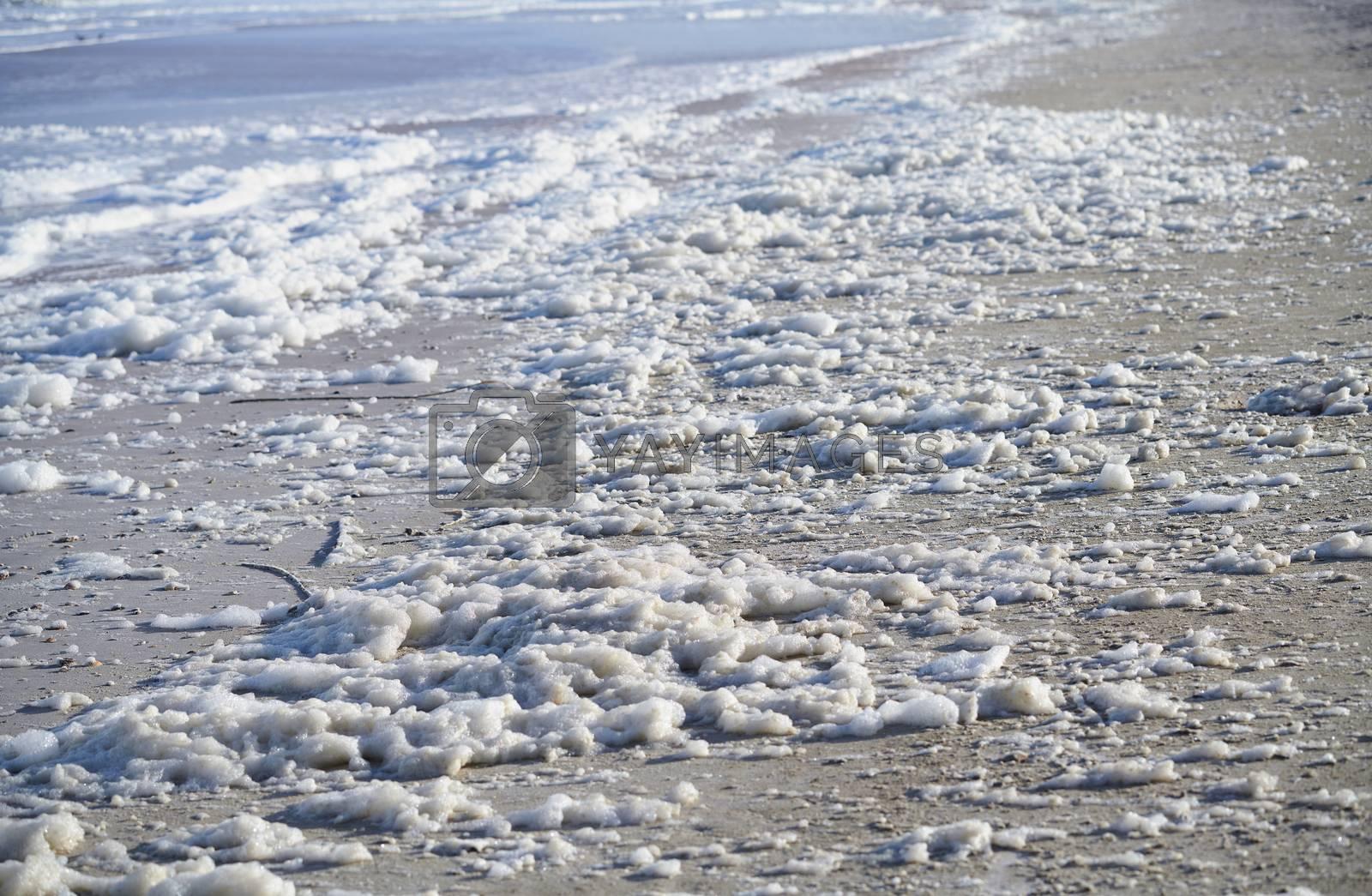 Sea foam on the coast at Pacific Ocean