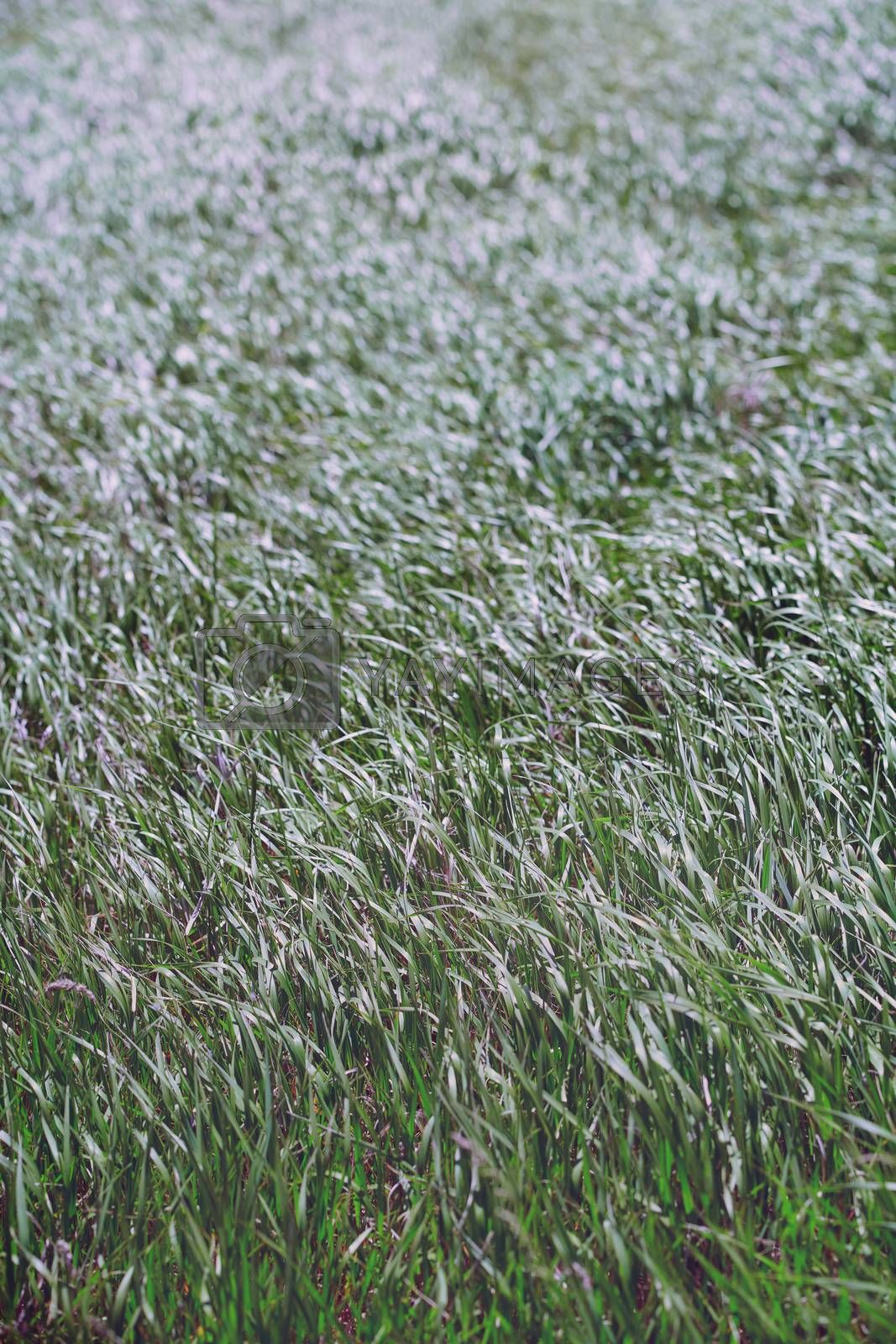 Pattern of the field grass
