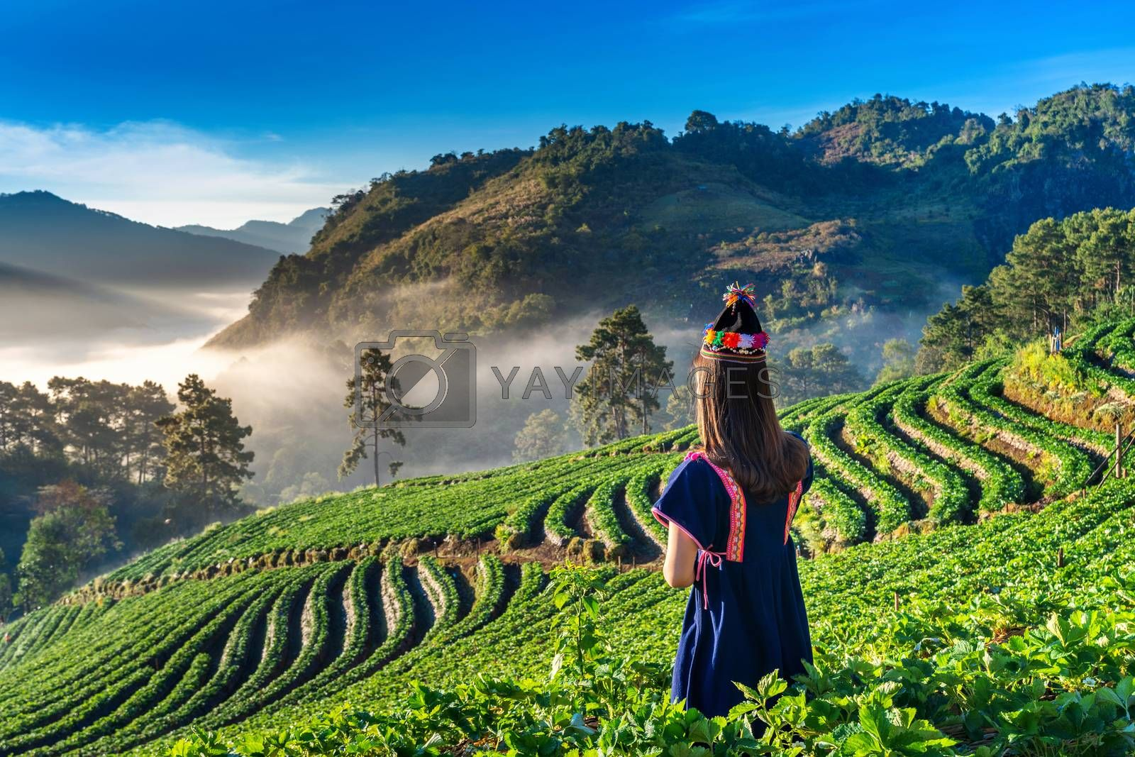 Woman wearing hill tribe dress in strawberry garden on Doi Ang Khang , Chiang Mai, Thailand.