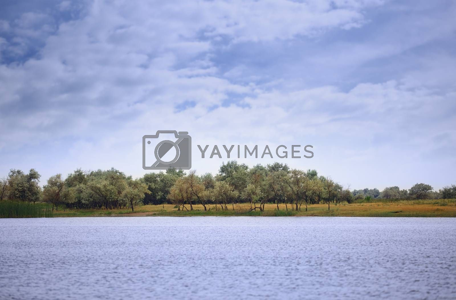 View on Rhine river with trees. Germany, Western Europe