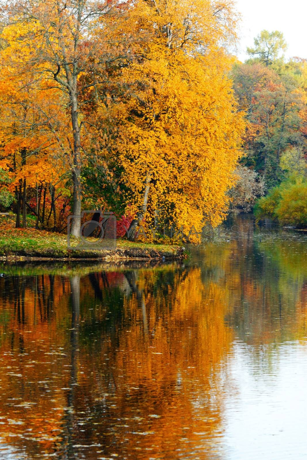 Beautiful autumn landscape with pond in colorful trees forest