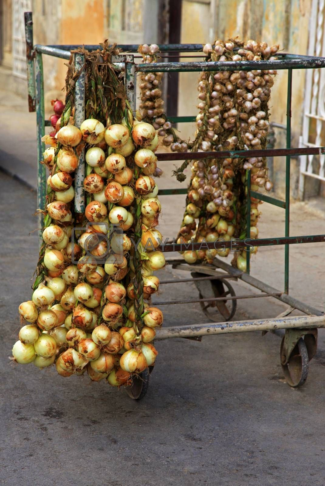 Royalty free image of Selling onions on the street in Old Havana by friday