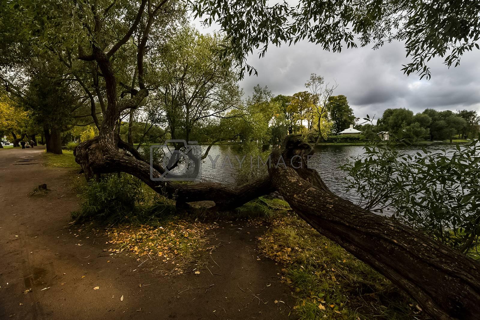 Nature near Peterhof, ponds and forest. by avstraliavasin