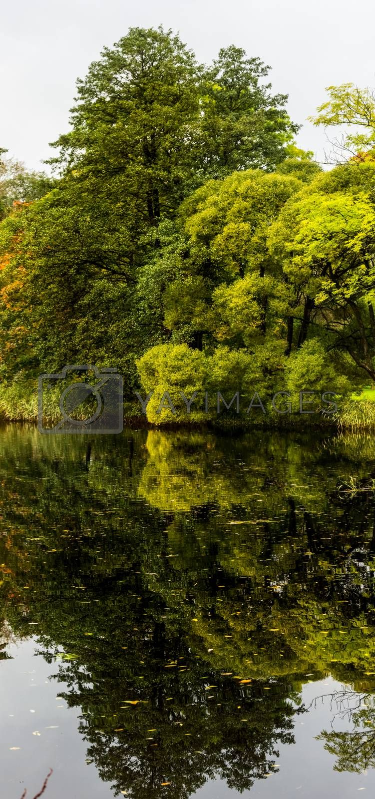 Nature near Peterhof, ponds and forest. Nature near Peterhof, ponds and forest