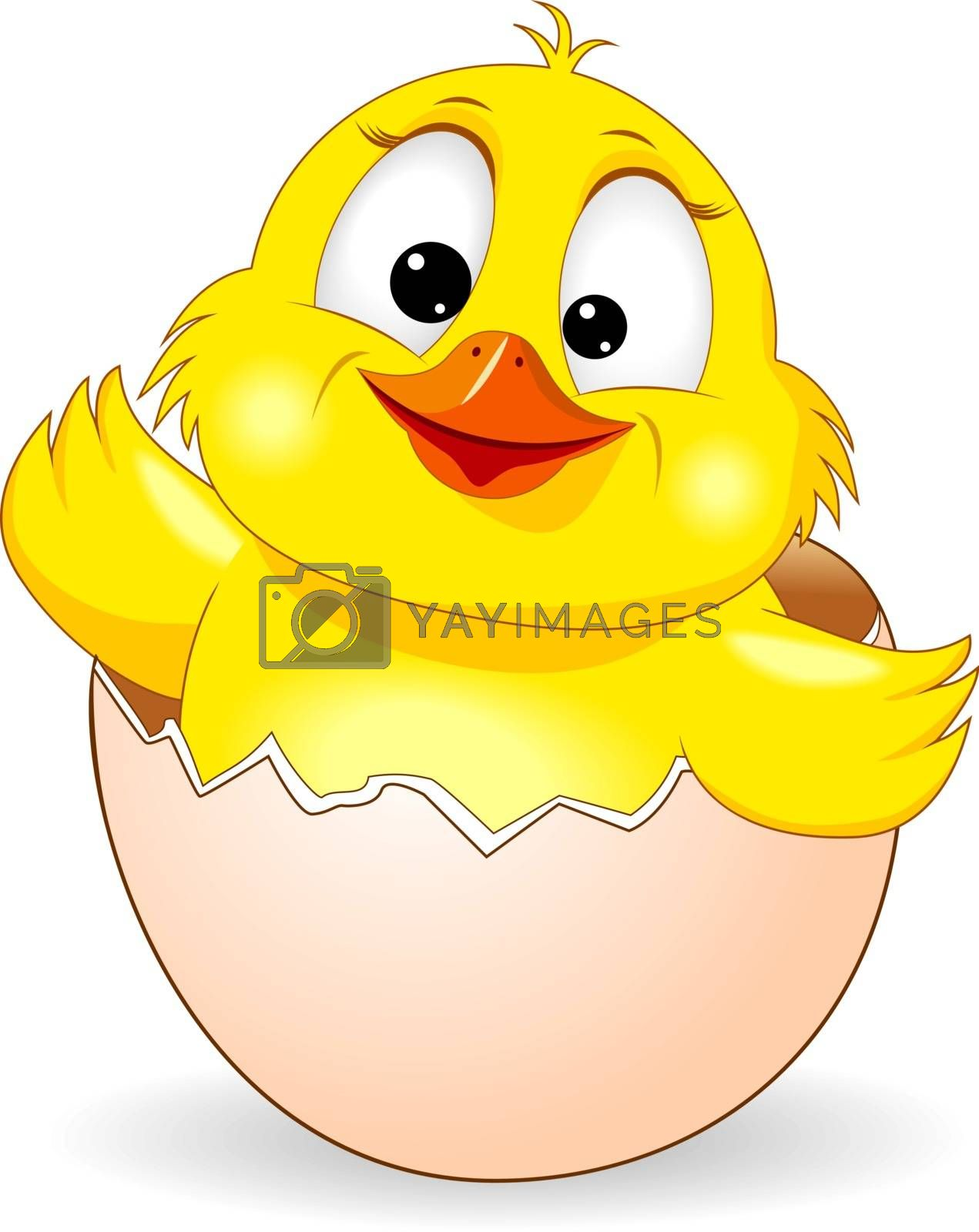 Little yellow chicken on white background. Cartoon chick peeking out of an eggshell.