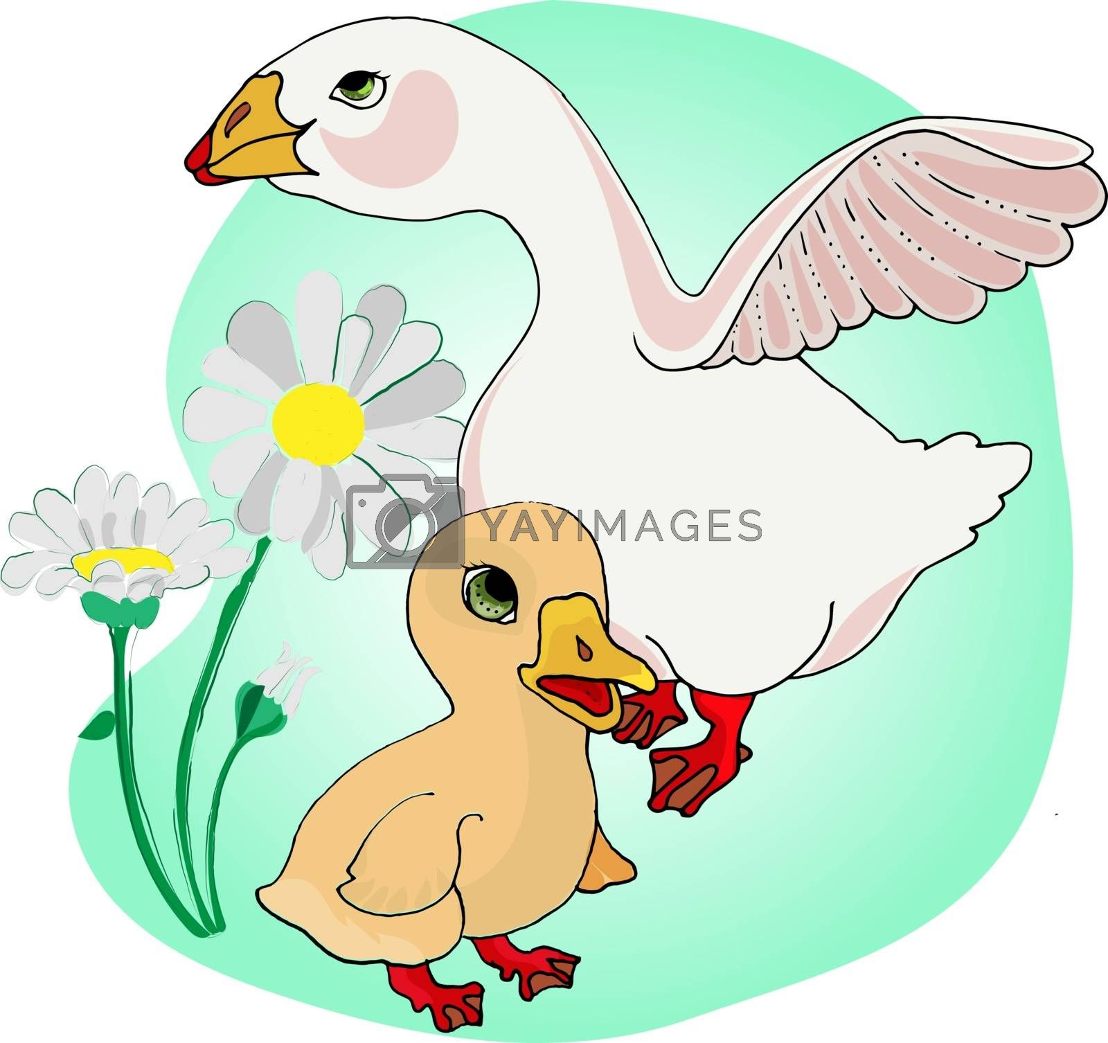Vector illustration of a goose on white background. Farm animals topic.