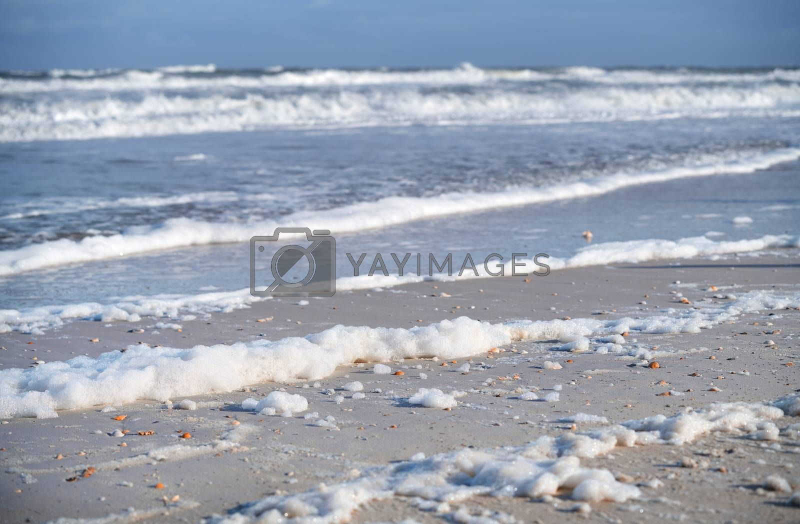 Coast of the Pacific Ocean with rare seashells and sea foam