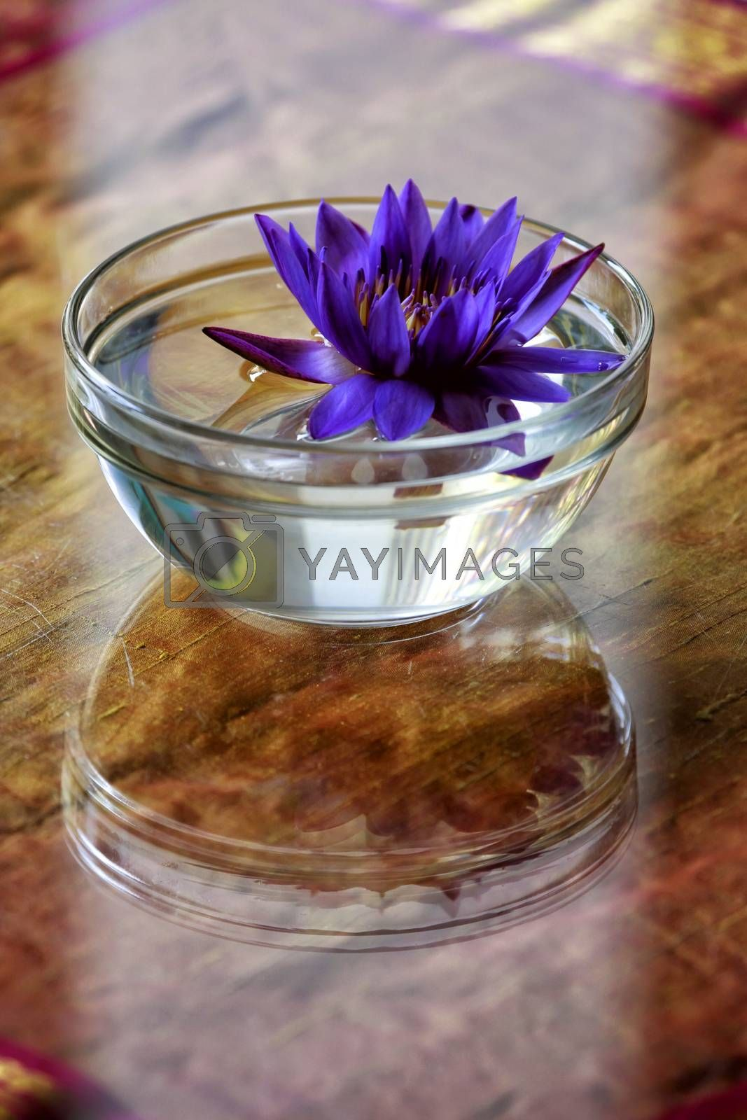 Royalty free image of Lotus flowers in a glass of water used to decorate the table by friday