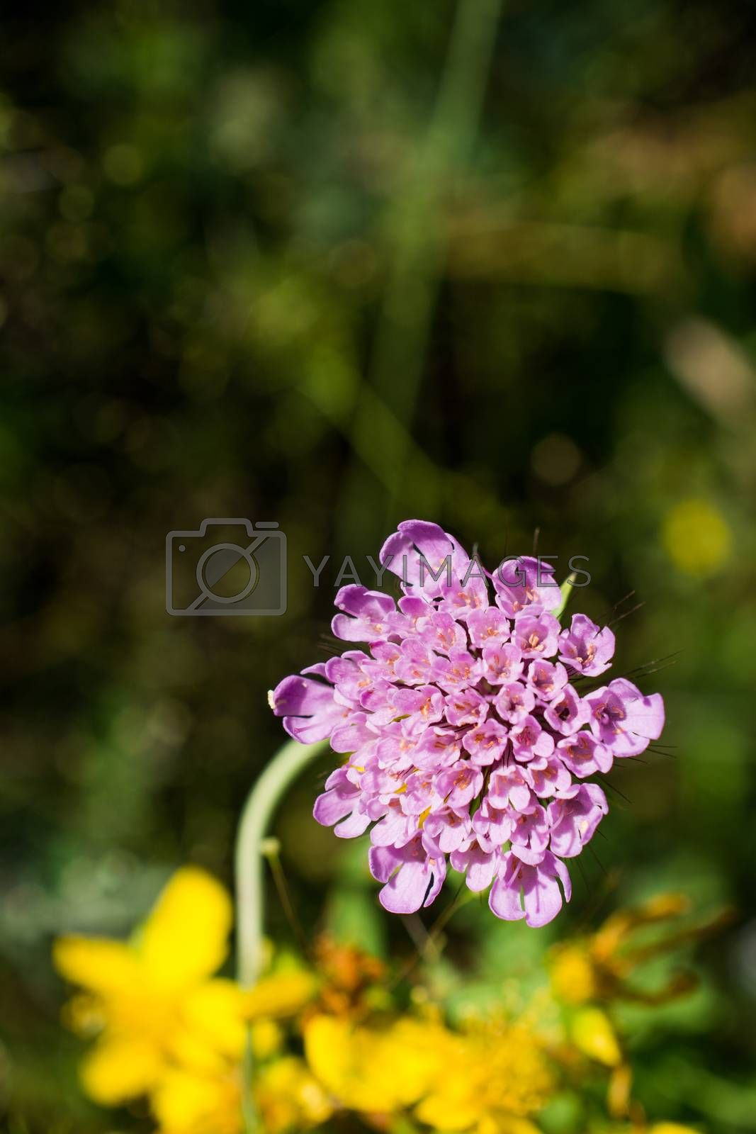 Beautiful fresh flowers in nature background