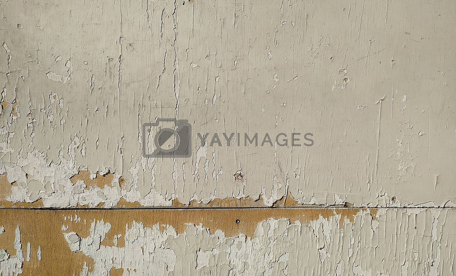 Wooden plate with peeling old white paint. Close-up.
