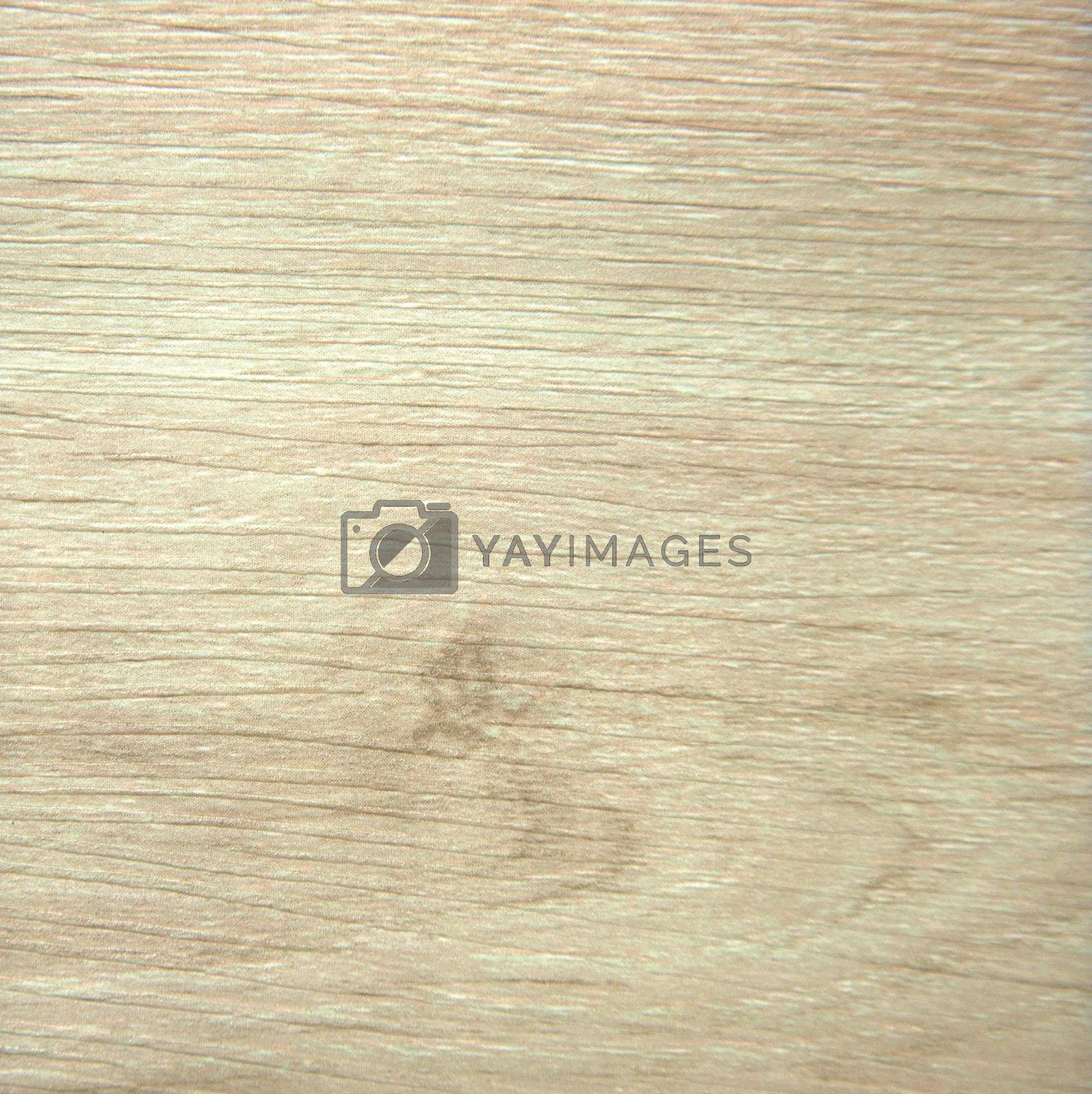 Natural drawing of white wood on the saw. Background. Texture.