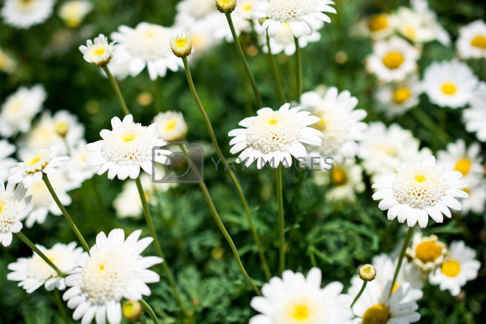 Beautiful flowers in nature by berkay