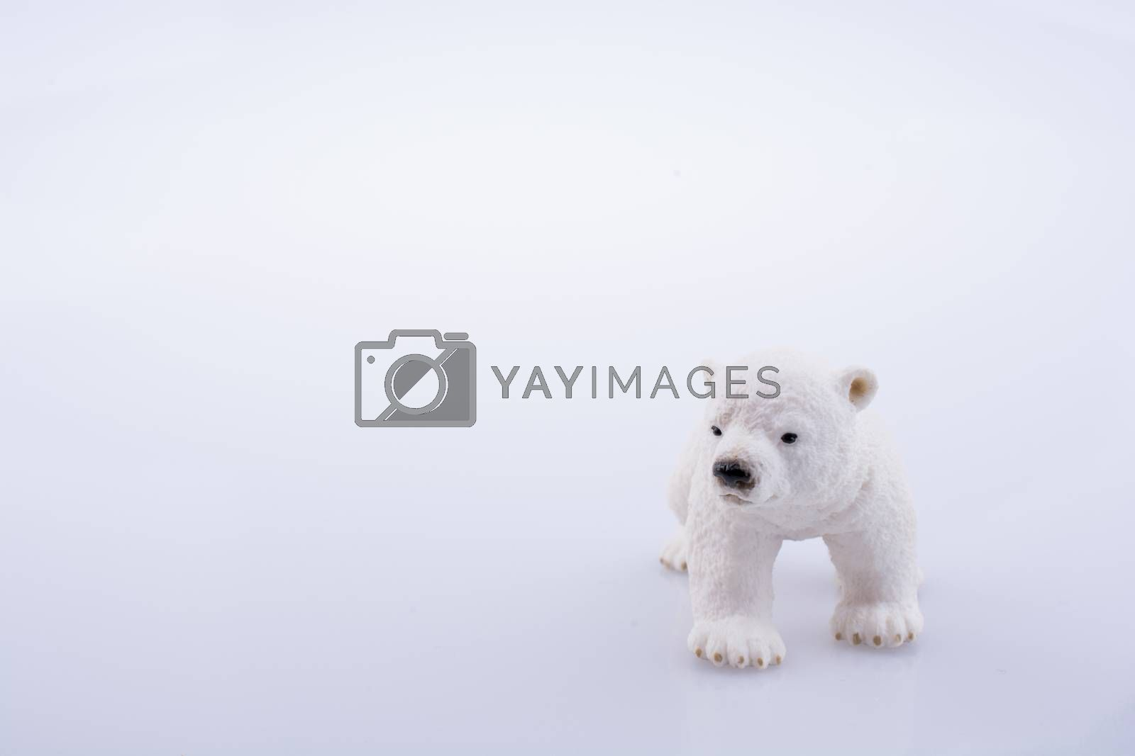 Polar bear model on a white background
