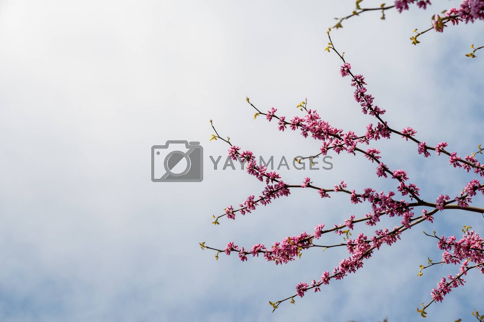 Colorful flowers bloom in the spring in trees