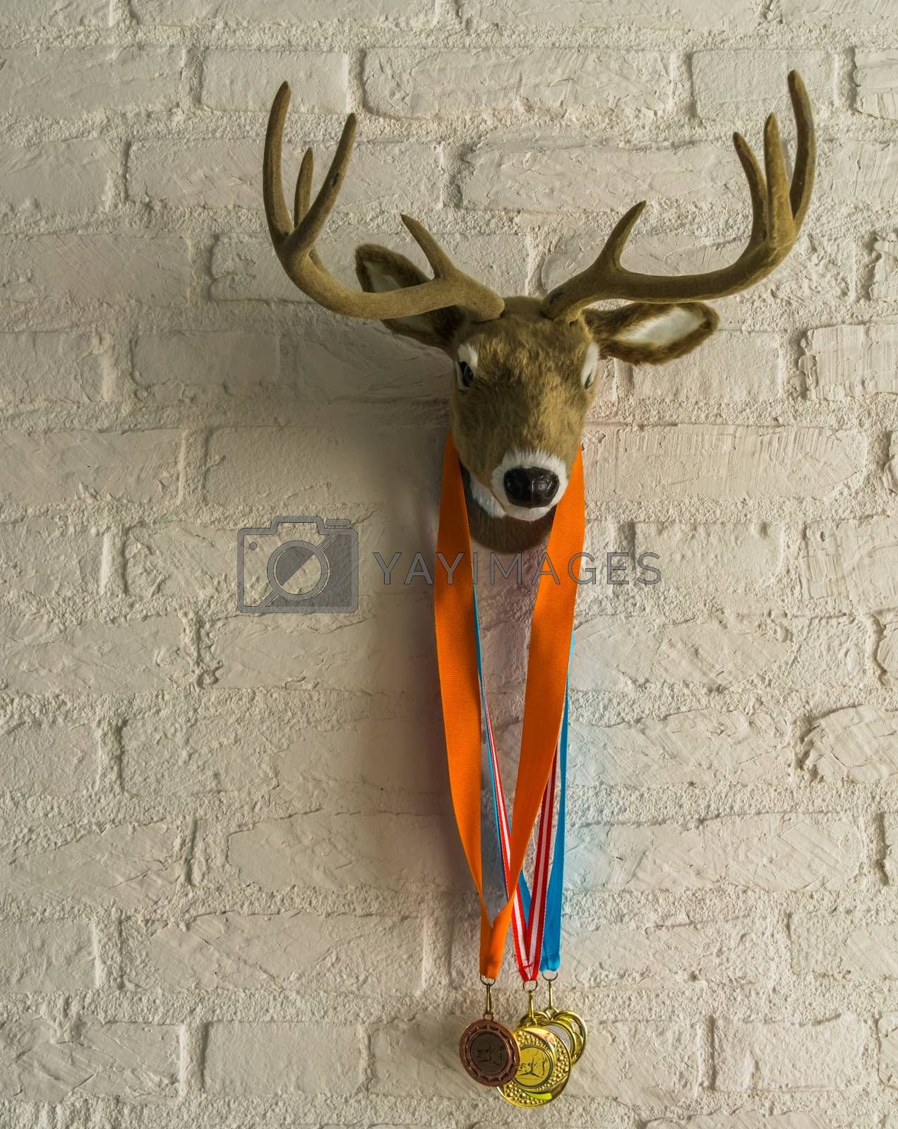 deer head with antlers hanging on a white brick wall, deer with sport medals around its neck by charlotte Bleijenberg