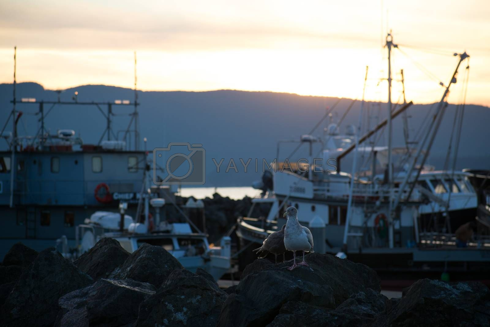 Bright sunrise on the marina with seagulls on the rocks