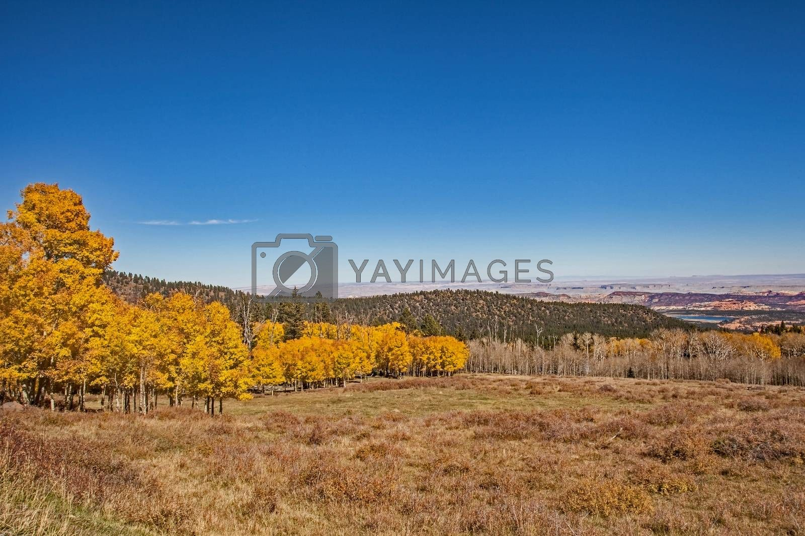 Quacking Aspen on the Scenic Byway 2 by Kobus Peche