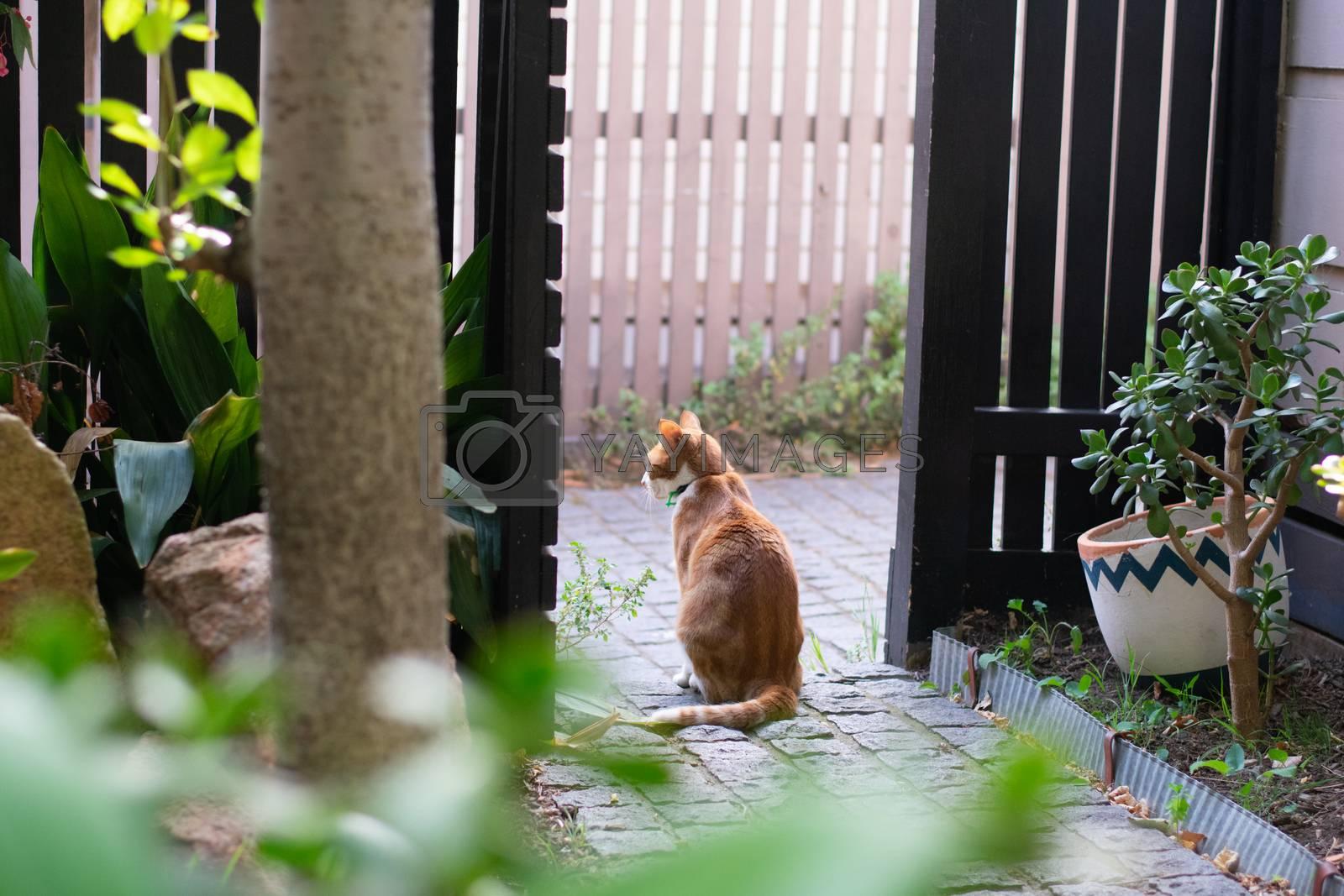 Ginger cat sitting in fence doorway looking away from camera in garden
