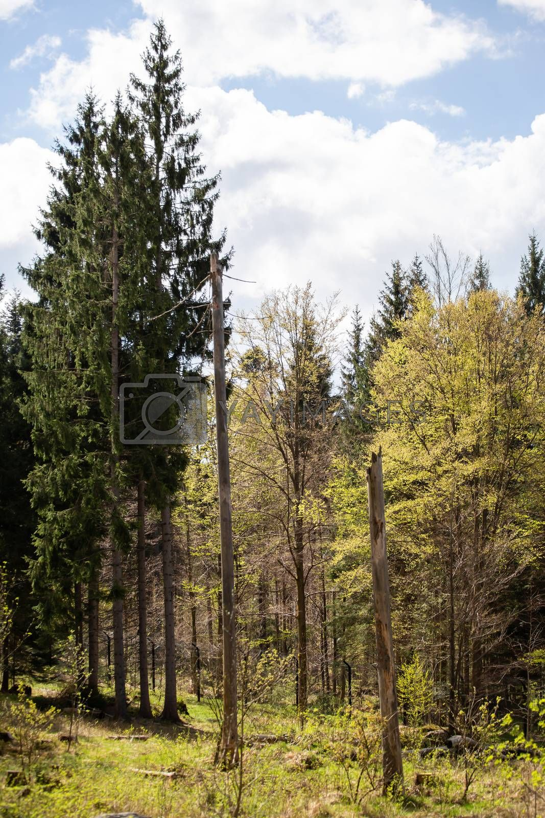 Landscape picture from the national park in Bavaria by Sandra Fotodesign
