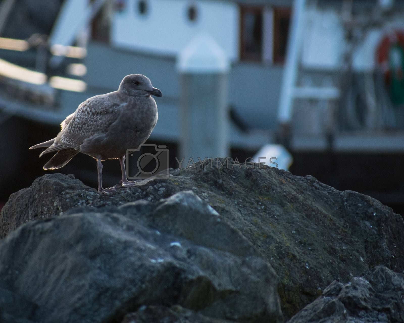 Seagull on marina by benwehrman