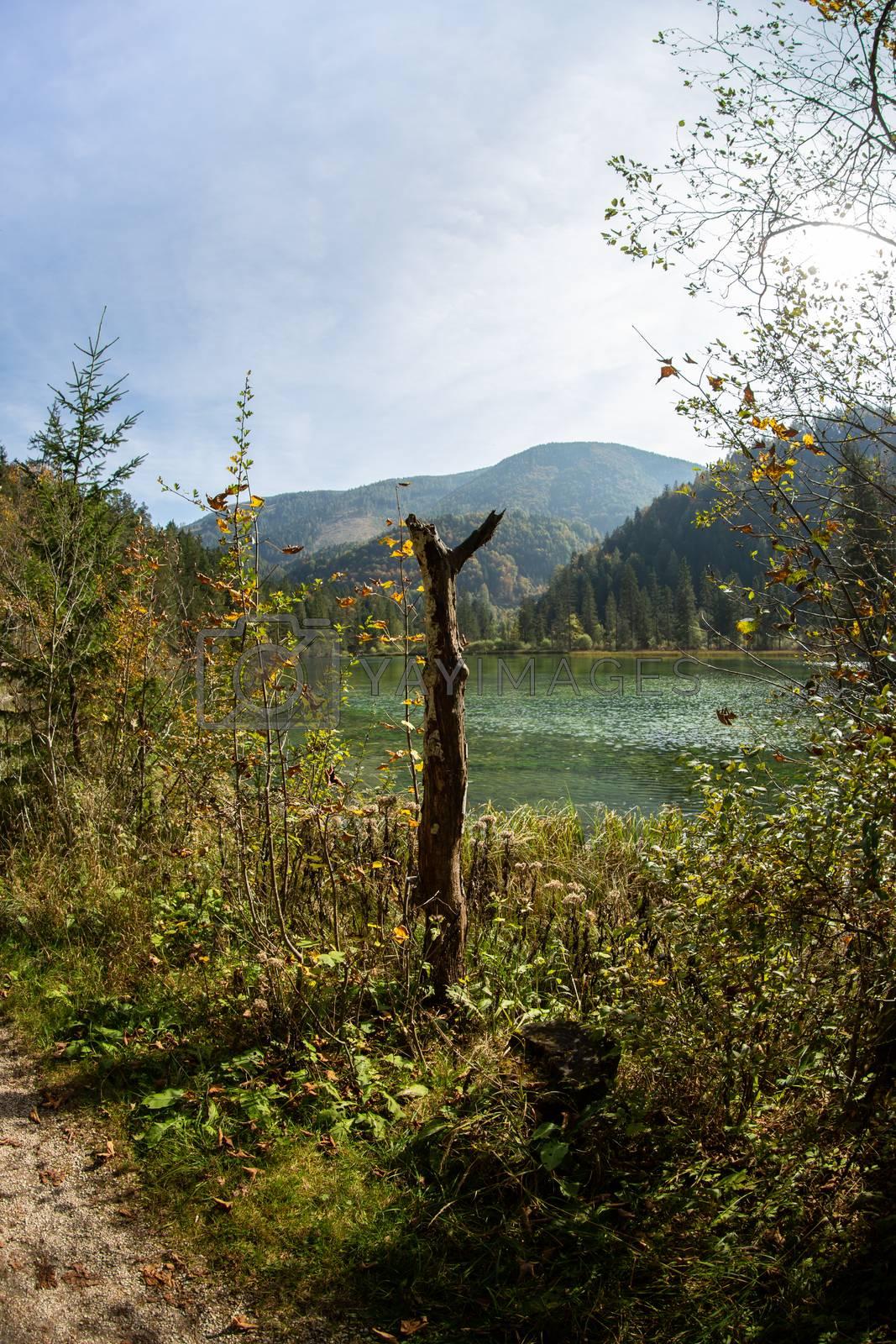 Sommer landscape at the Schiederweiher in austria by Sandra Fotodesign