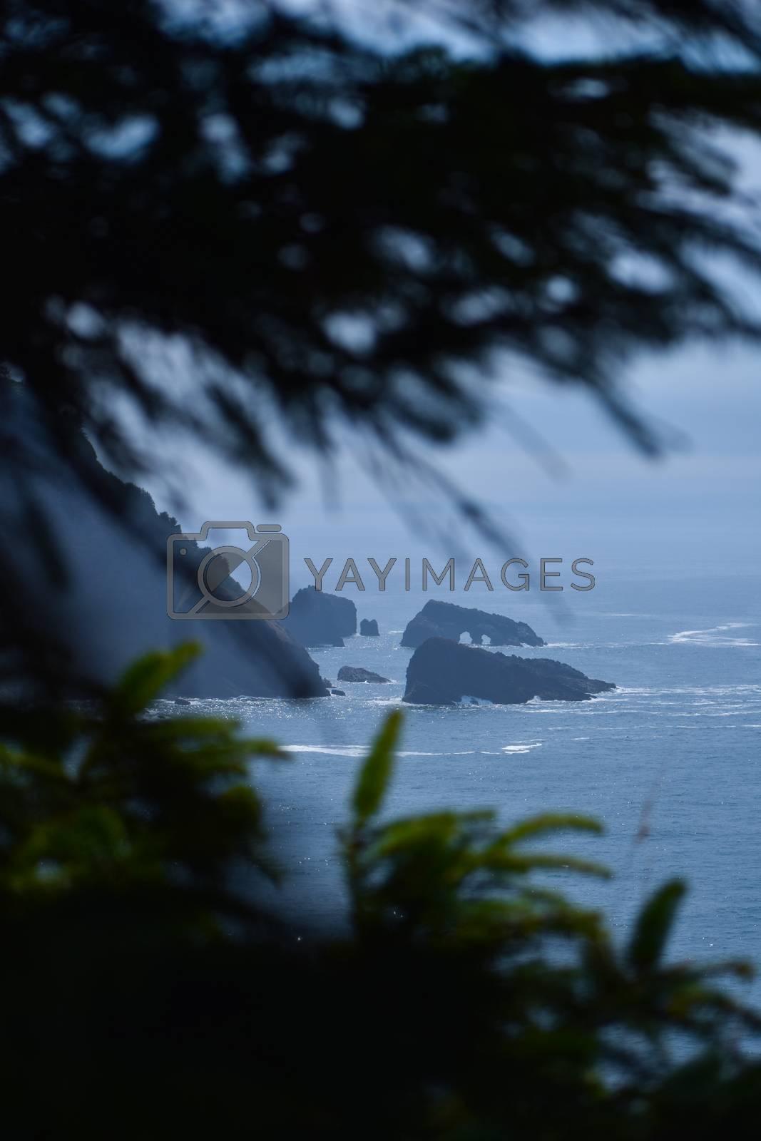 Dark moody beach view through trees