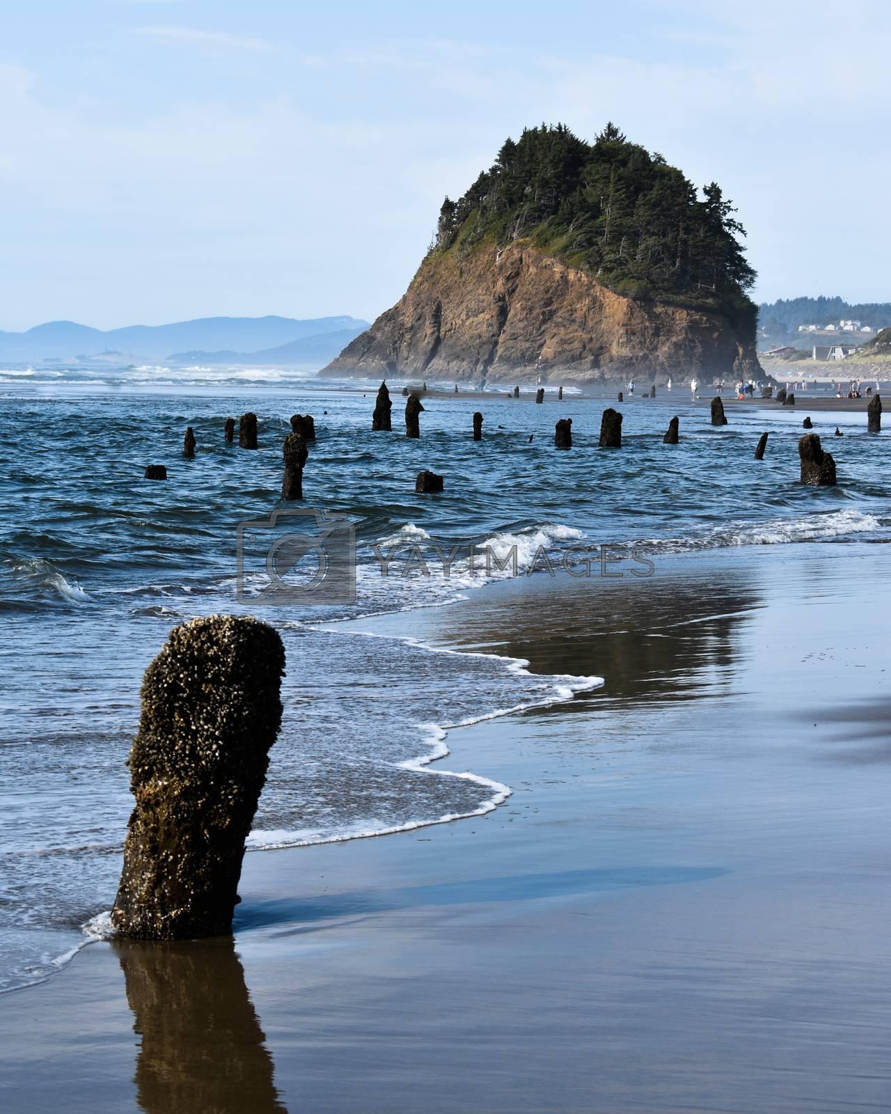 Stumps on a sandy beach on the Oregon Coast