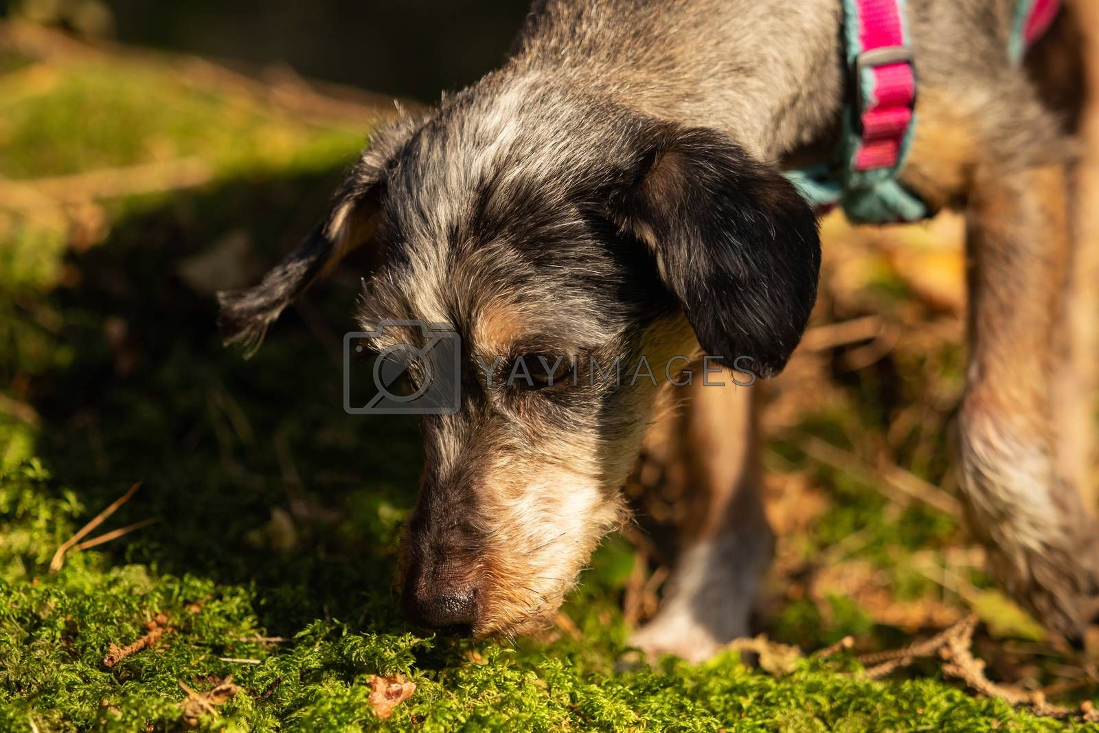 A little terrier mixed breed with short hair by Sandra Fotodesign
