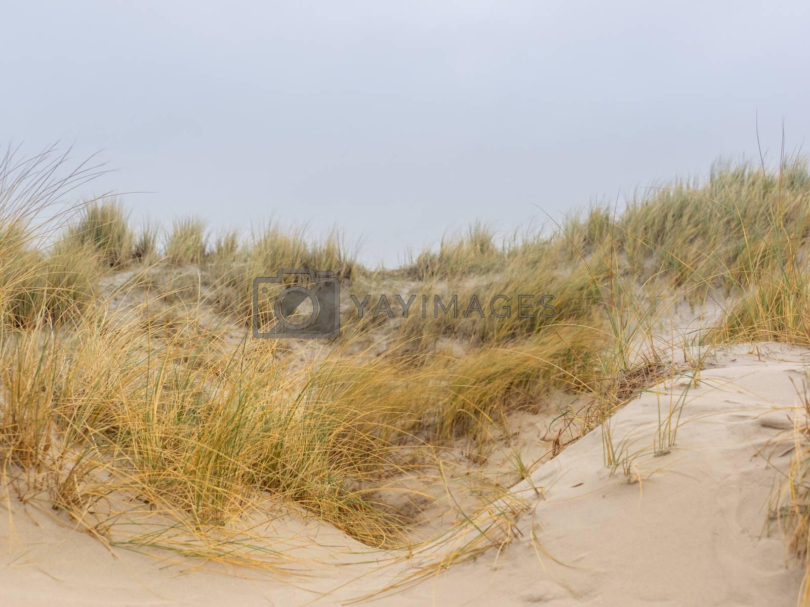 Dune landscape on the island Helgoland by Sandra Fotodesign