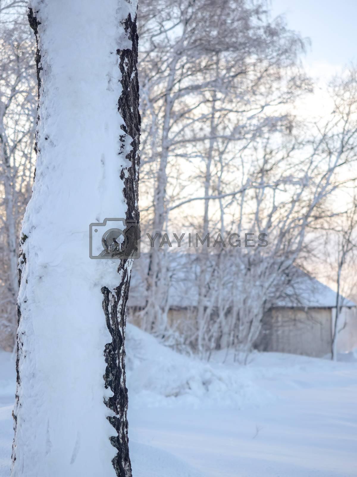 A wonderful winter landscape in beautiful Bavaria by Sandra Fotodesign