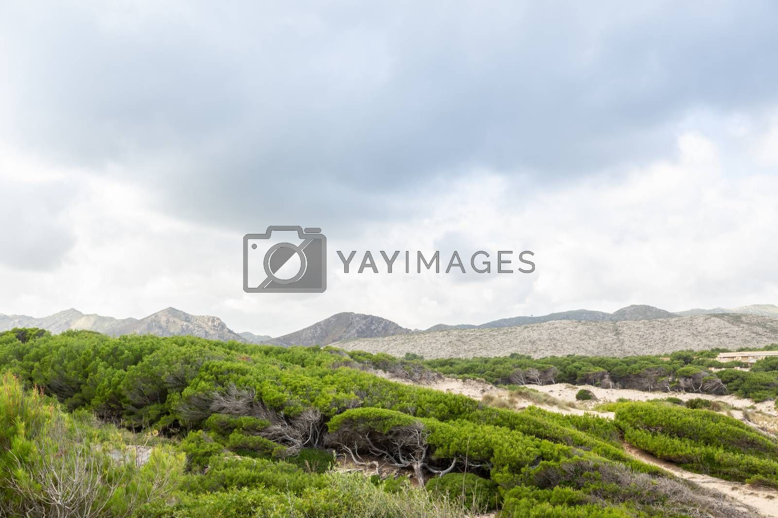 Wonderful dune landscape Cala Mesquida Mallorca Spain by Sandra Fotodesign