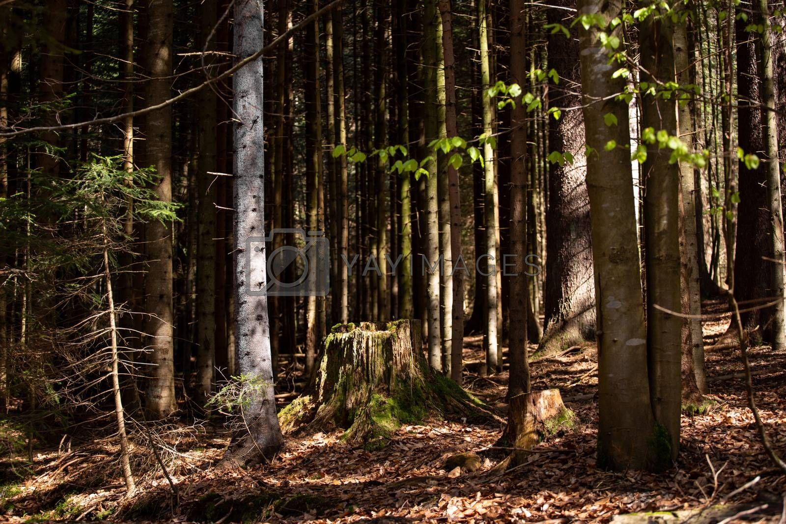 Impressions from the national park in Ludwigsthal Bavaria by Sandra Fotodesign