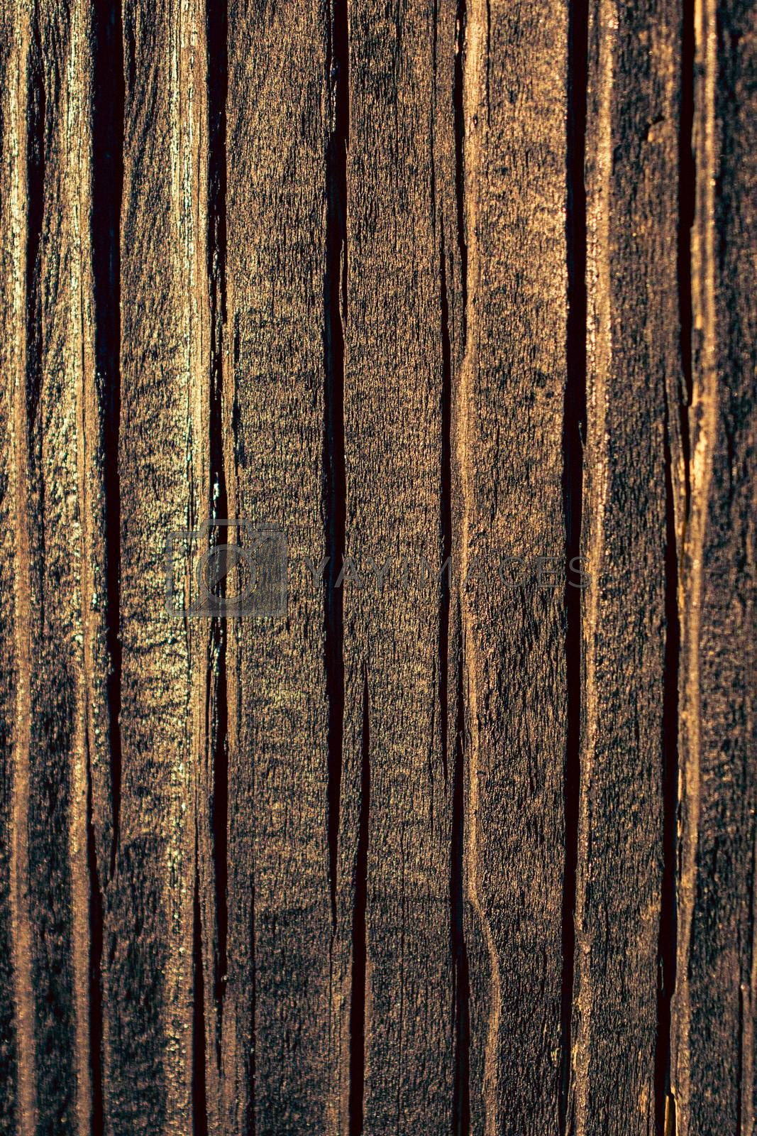 Wood texture with natural patterns as a background