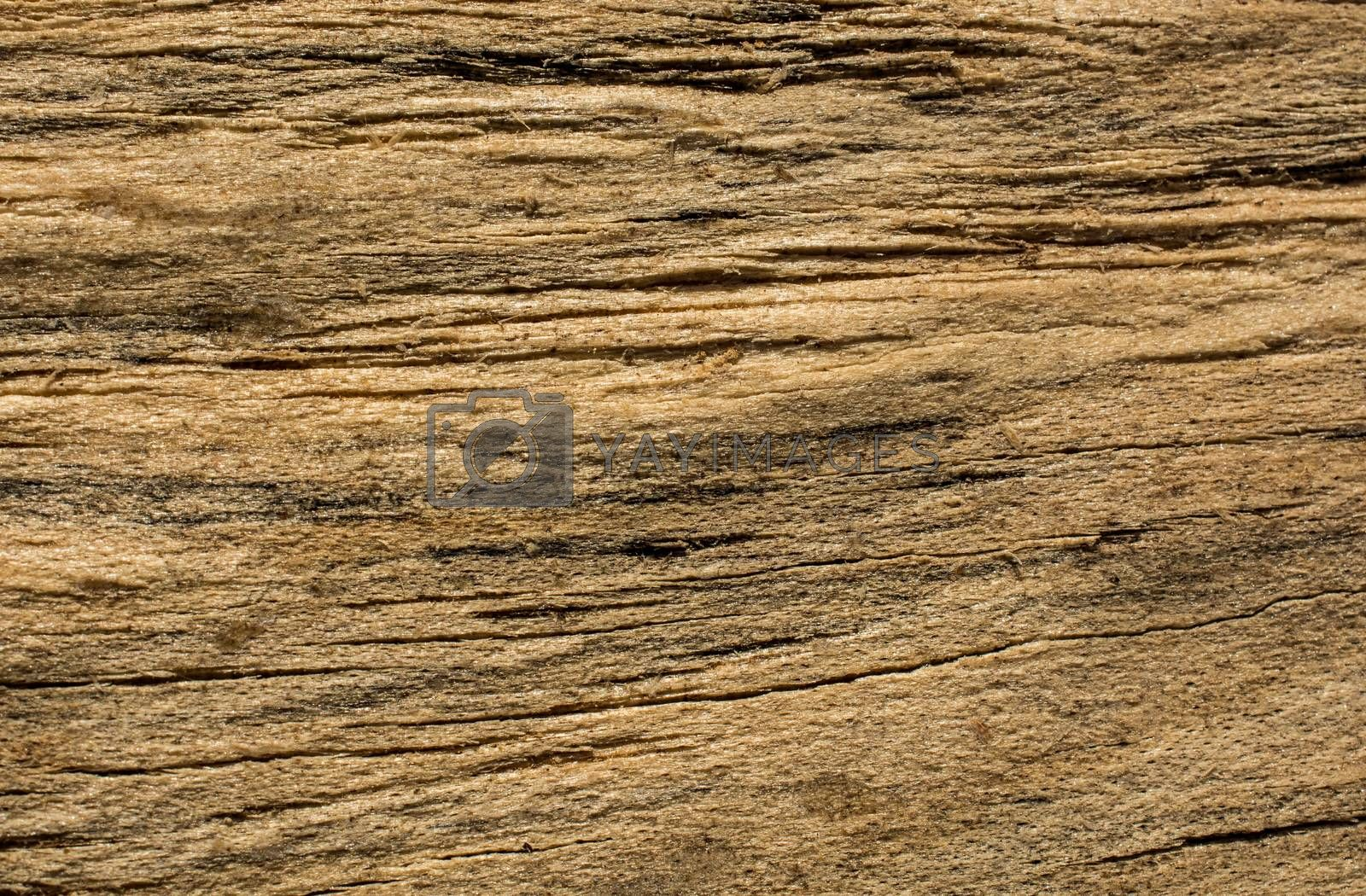 Wooden texture with natural patterns as a background
