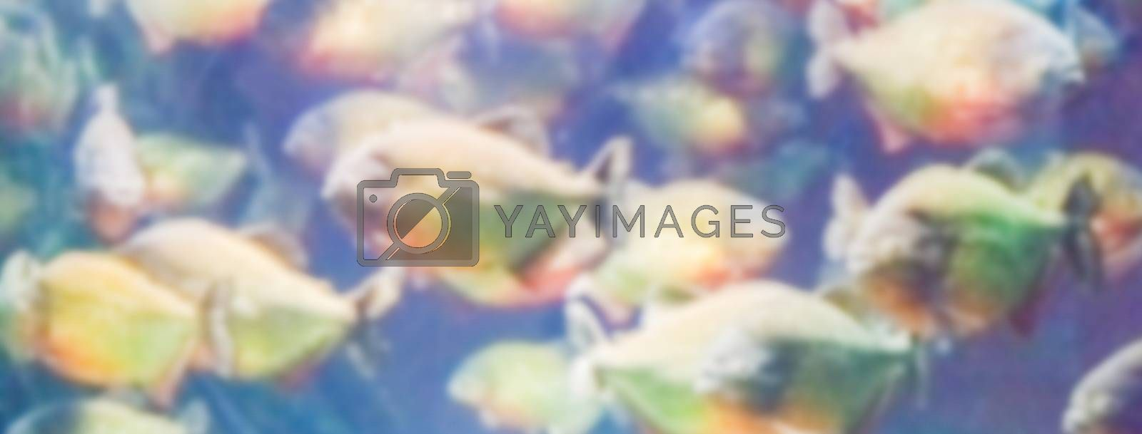 Defocused background with a flock of piranhas. Intentionally blurred post production for bokeh effect