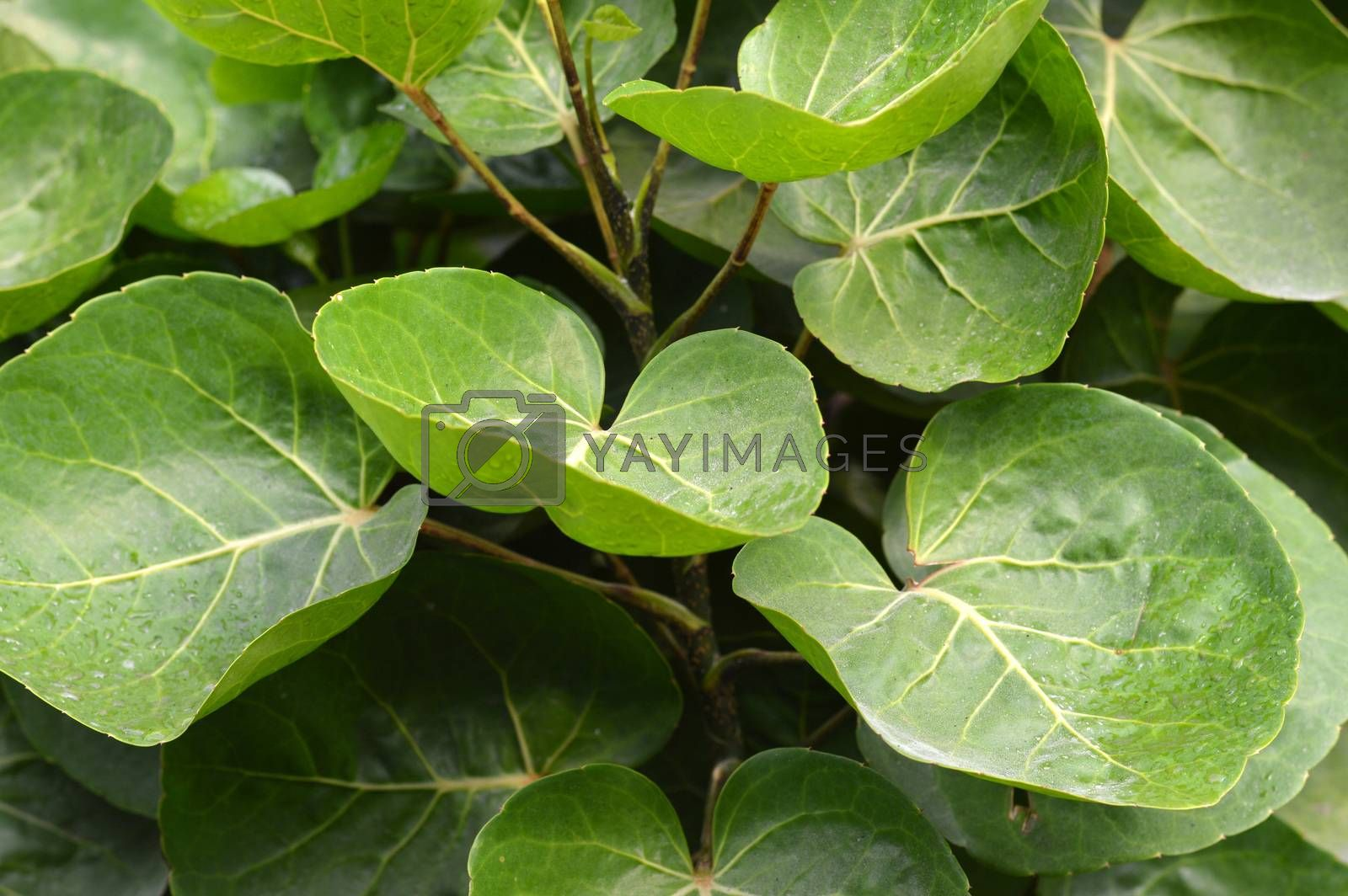 detailed of pattern leaf texture