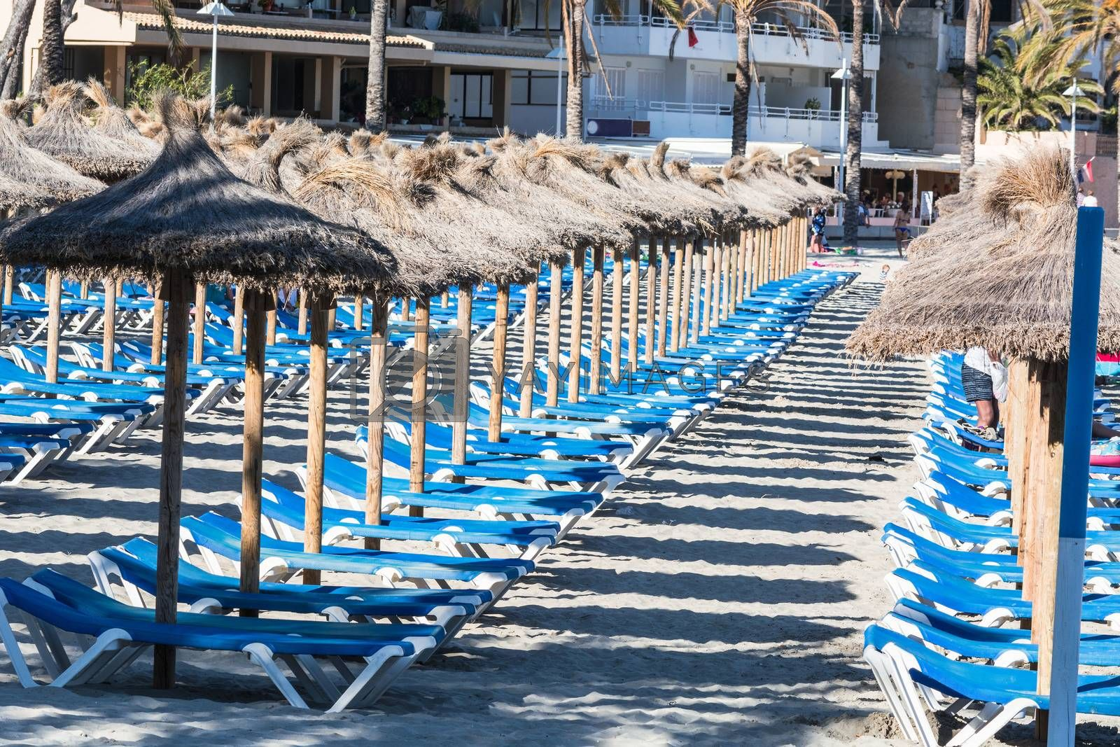 Sun loungers and parasols at the tropical resort. Line of lounge chairs. Blue sea and sky in the background. Summer holidays concept.
