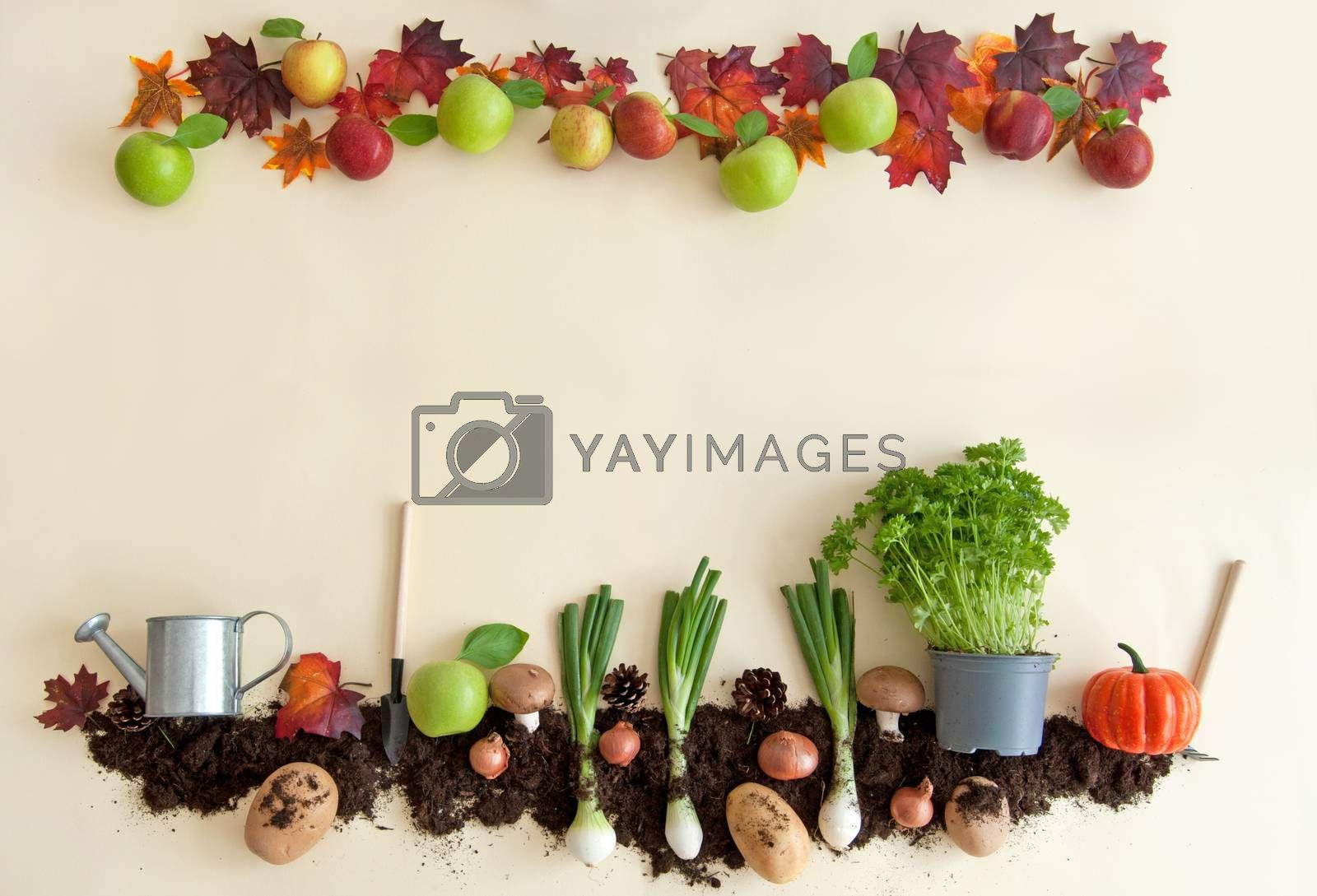 Royalty free image of Autumn fruits and vegetables  by unikpix
