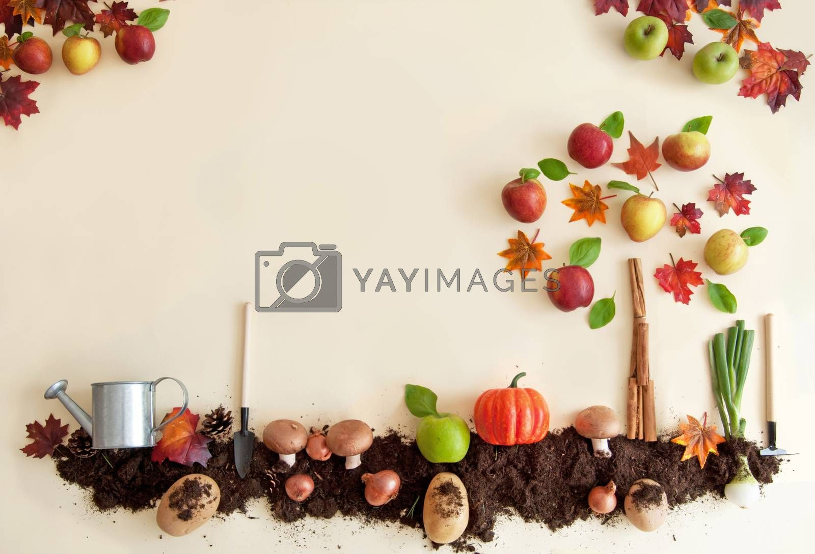 Royalty free image of Autumn fruit and vegetable garden by unikpix