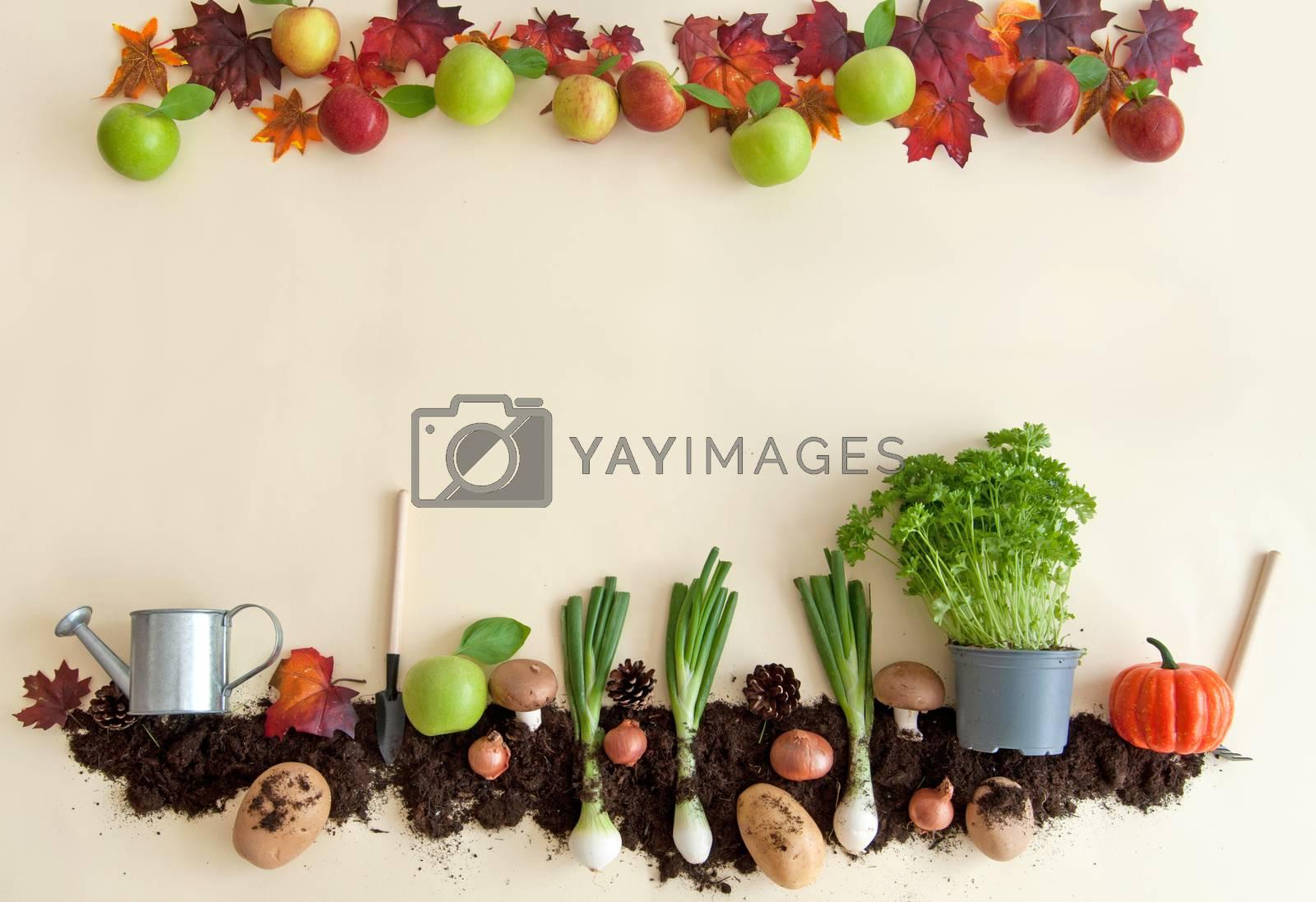 Royalty free image of Autumn harvest background by unikpix