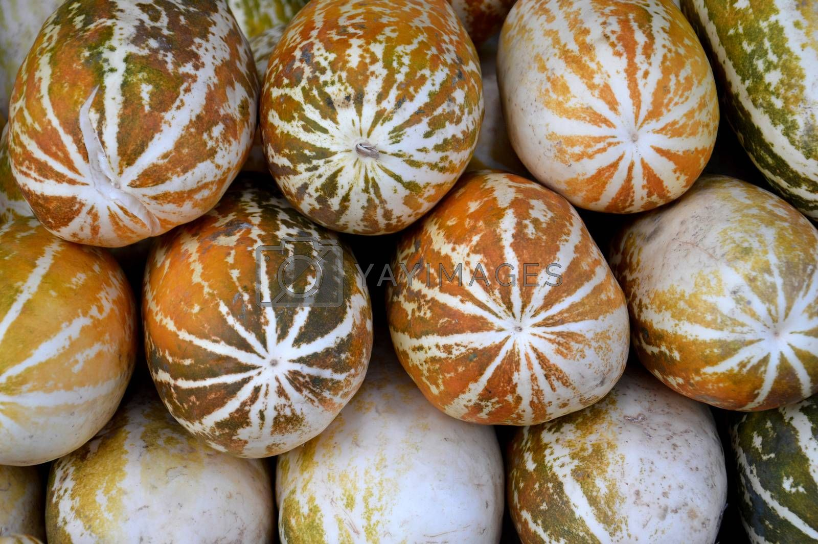 cantaloupe fruit by antonihalim
