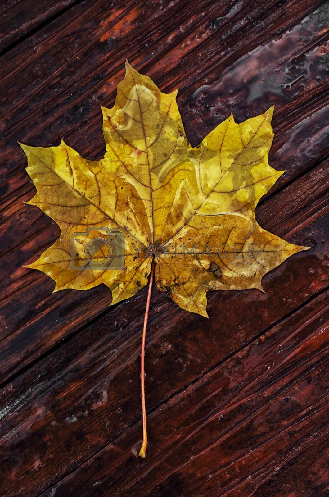 Symbols of autumn, fallen leaves, November