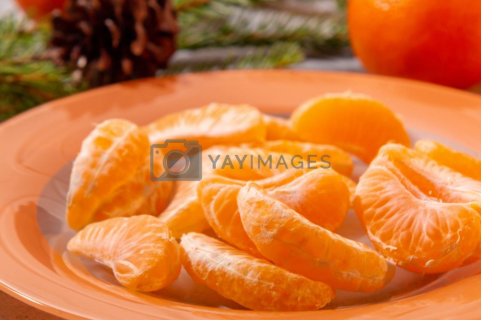 Several peeled tangerine slices on an orange plate with tree branches and a cone-a traditional Christmas and new year's composition in Russia by galsand