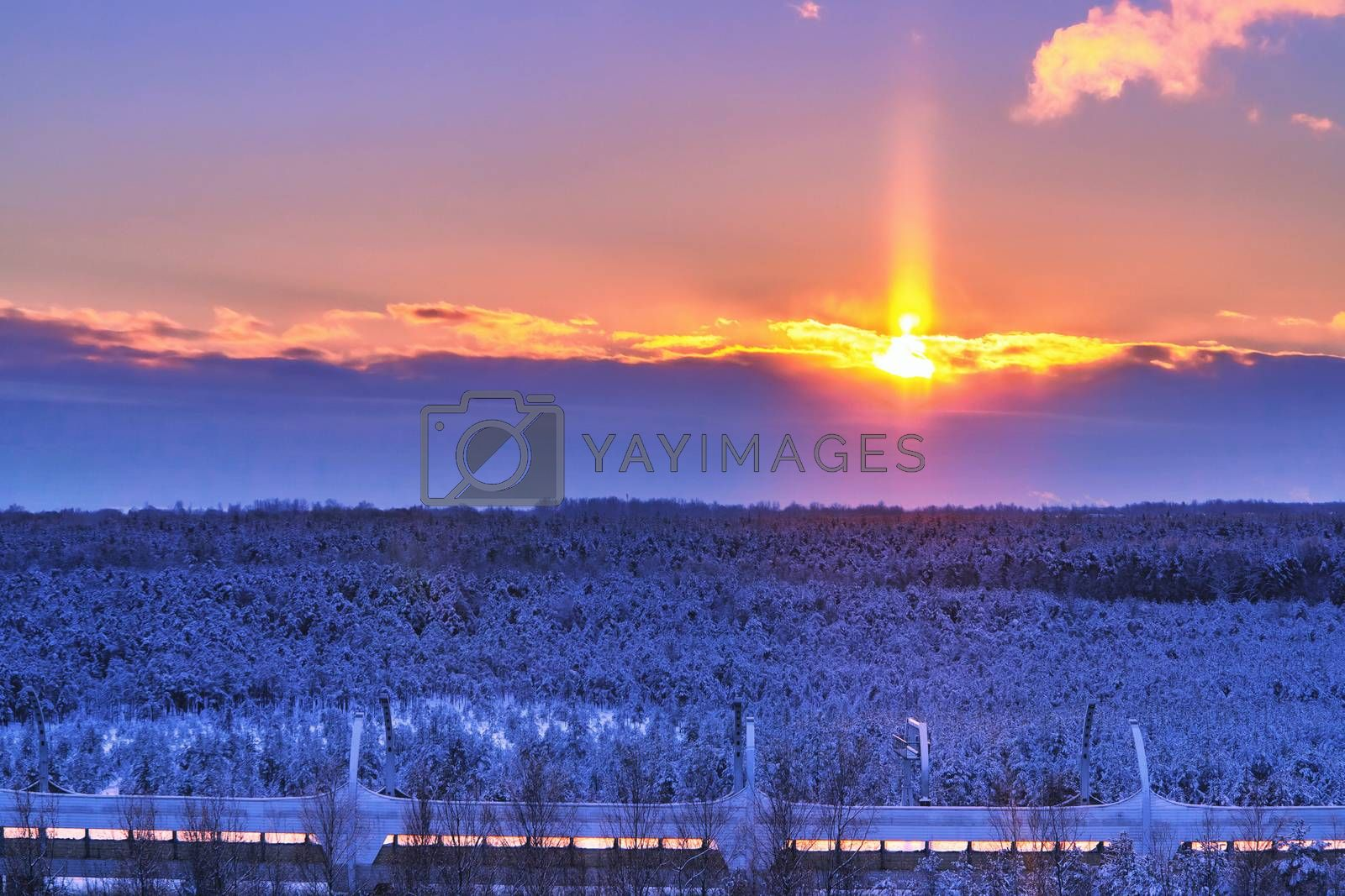 Beautiful winter landscape. View of the snow-covered pine forest at sunset by galsand