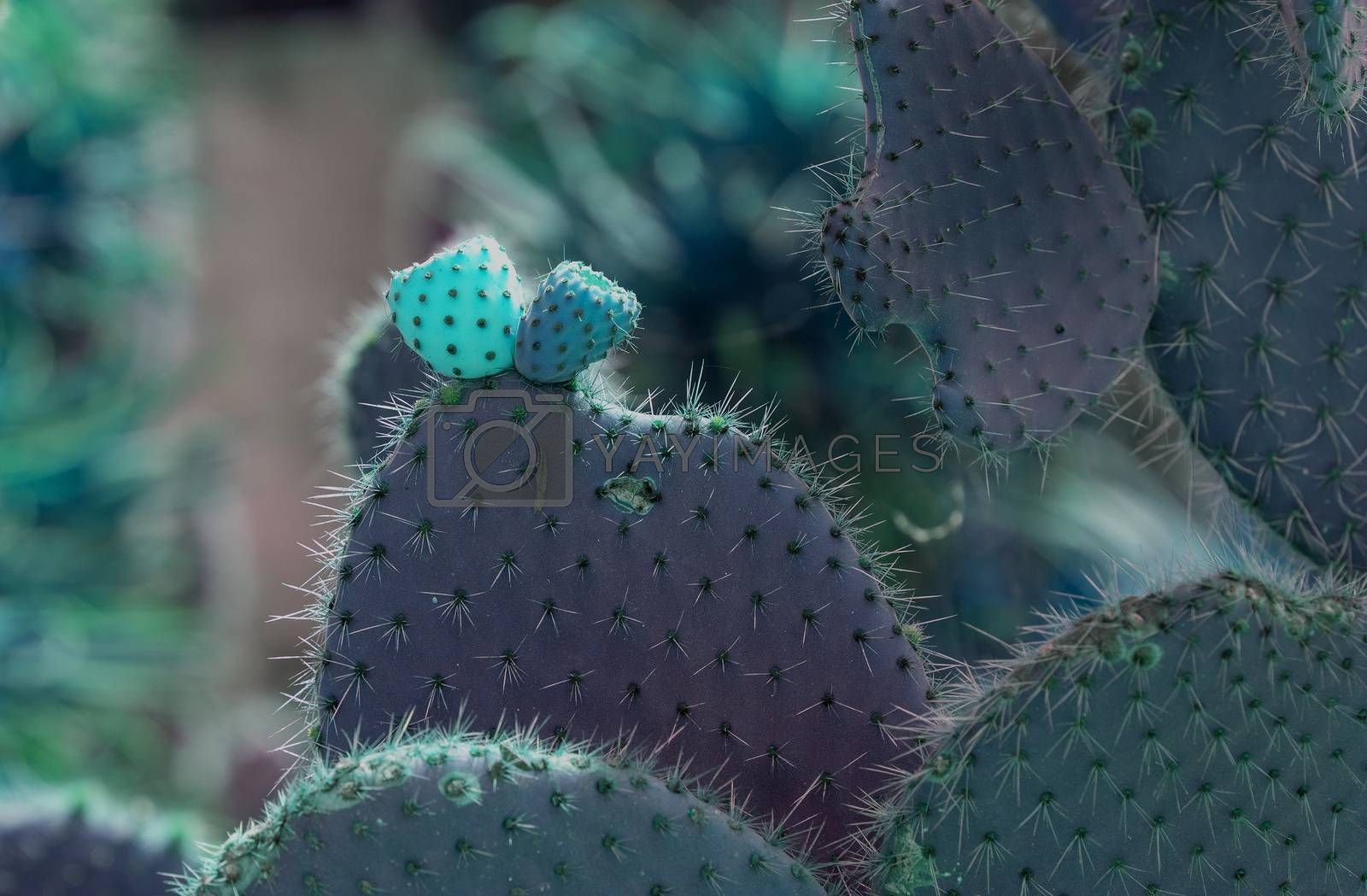 Surrealistic abstract glow thorny cactus with spikes and little fruits